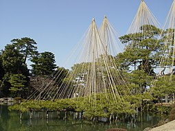 Estructuras que soportan los pinos y algunos árboles en el Jardín Kenroku.