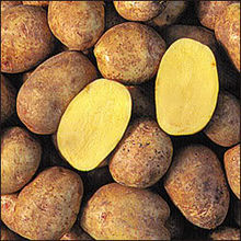 Yukon-gold-potatoes.jpg