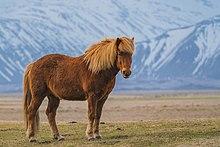 Zaniskari Horse in Ladakh.jpg