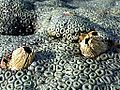 Zoanthids and barnacles.jpeg