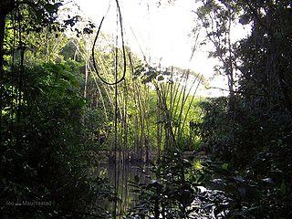 Swamp Forest, Brazil