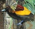 ZooBirdOfParadise.jpg