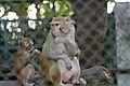 Zoo of Ahmedabad, India (4051916561).jpg