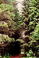""""""" дорога """" из Жилкино в Луговую ( некоторые пытаются проехать) - panoramio.jpg"""