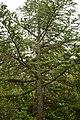 Αισθητικό Δάσος Καισαριανής 2.jpg