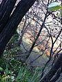 Μαγική κοιλάδα Τεμπων.jpg