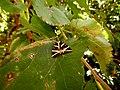 Πεταλούδες.jpg