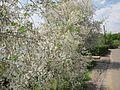 Весна в Воронеже - panoramio.jpg