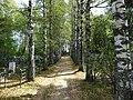 Вокруг захоронения за 70 лет выросло городское кладбище, Быково Кайдаковского сельского поселения, Вяземский район.jpg