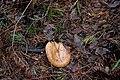 Глибокий ліс IMG 4282.jpg