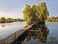 Дерево и озеро.jpg