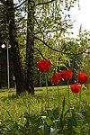 Донецкий Ботанический сад.jpg
