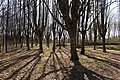Липовий парк,Шарівський палац 01.jpg