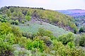 Липовская гора(Ретинская Дарья) (4).jpg