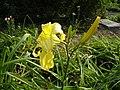 Нікітінський ботанічний сад, квіти9.jpg