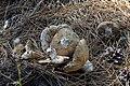 Олешківські піски влітку. Гриби з соснового лісу.jpg