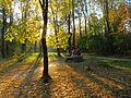 Пуща-Водиця. Осінь. IMG 1102.jpg