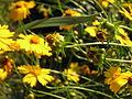 Растения в Седово 255.jpg