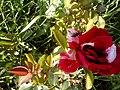 Роза и пчела.jpg