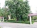 Сквер, м. Кам'янець-Подільський, розташований по вул. Шевченка, 13.jpg