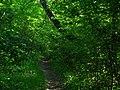Сквозь зелень - panoramio.jpg