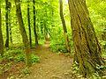Снопківський парк 2.jpg