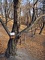 Украина, Киев - Голосеевский лес 233.jpg