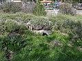 גבעת העמדות ברכס נשר ההיסטורי - שרידי שירותים (2).jpg