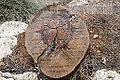 דבר על העצים (11305457725).jpg