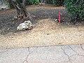 לאורך כביש 5 - מיכל מיכאלי מצלמת (8514605963).jpg