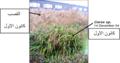 الشكل (2-8-4-1) يوضح وضع النباتات في موسم الشتاء.png