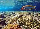 تنوع الاسماك والشعاب بمحمية رأس محمد.jpg