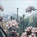 نمای قله هفت خان از روستای لیلستان.jpg
