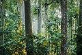 রাস্তা থেকে দেখা লাউয়াছড়া উদ্যানের দৃশ্য.jpg