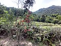 新丰司茅坪林场20150412 - panoramio (83).jpg