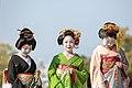 知恩院 舞妓撮影 Chion-in Maiko (11153150153).jpg