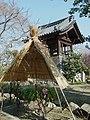 石光寺の寒牡丹 葛城市染野 A peony flower in Sekkōji 2012.1.17 - panoramio.jpg