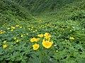 花の谷(The flower's valley) - panoramio.jpg