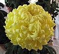 菊花-黃劍雲 Chrysanthemum morifolium -香港圓玄學院 Hong Kong Yuen Yuen Institute- (12129743646).jpg