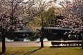 諏訪公園の桜 - panoramio.jpg