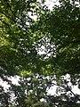 香川県丸亀市丸亀城 - panoramio (6).jpg