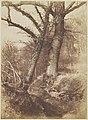 -Trees- MET DP143008.jpg