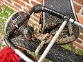 0138-fahrradsammlung-RalfR.jpg
