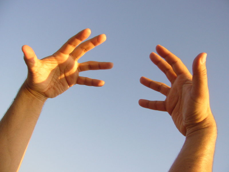 File:071228 human hands.JPG