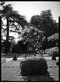 10.06.1964. Vue de la propriété. (1964) - 53Fi4687.jpg