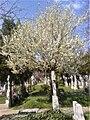 11. Bucuresti, Romania. Cimitirul Bellu Catolic. Zi de primavara in Cimitir, martie 2017.jpg