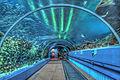 bay aquarium baltimore aquarium aquarium in shopping mall churaumi ...