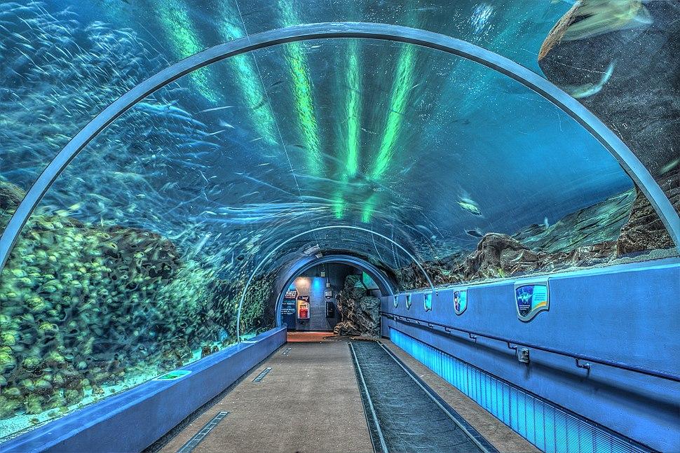 16 08 070 aquarium