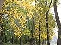 17.10.2010 - panoramio (12).jpg