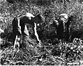 1933. Ribes Camp F-44. Blister rust control. Merry Creek, Idaho. (33730451721).jpg
